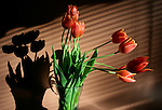 Red tulips in vase with shadow and sunlight
