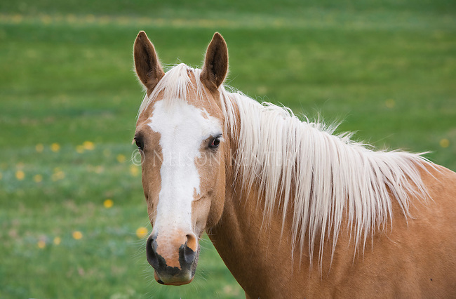 A Horse in a pasture in springtime