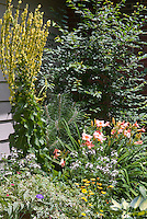 Verbascum Christo's Yellow Lightning, Hemerocallis Little Heavenly Angel (pink daylilies), Hosta June, Ampelopsis brevipedunculata var. maximowiczii 'Elegans' variegated, Coreopsis, Calendula in garden border bed next to house