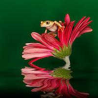 Frog & Reptile Workshops