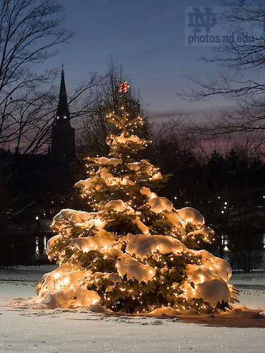 Christmas tree on Holy Cross Hill
