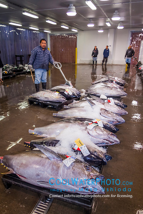 Ahi or yellowfin tunas at honolulu fish auction masa for United fishing agency