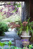 Cattleya orchid in pot by door, Sally Robertson's California cottage garden