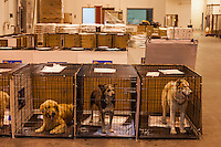Scenes at a temporary shelter set up at the Columbia SC airport to house animals taken during a raid on a puppy mill in Johnston, SC on Tuesday, Sept. 11, 2012. HSUS workers found over 200 dogs, nine horses and 30-40 fowl.