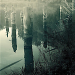 Old posts reflected in the water of a lake