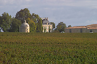Vineyard. Medoc, Bordeaux, France