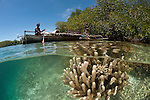 Split level of a shallow coral reef and mangroves with local West Papuan man and his wife in their dugout canoe. North Raja Ampat, West Papua, Indonesia