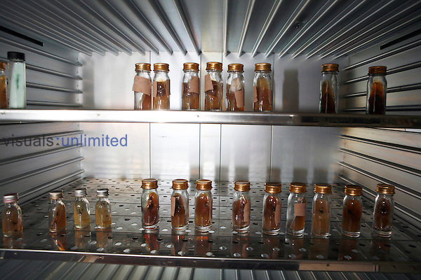 Multiple Mycetoma cultivation samples stored in a cultivation store. ..Cultures are taken and examined to determine if the bacteria or fungi are present in multiple numbers and can be tested against sereral antibiotics. Royalty Free