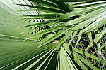Overlapping detail on tropical palm trees in Caribbean