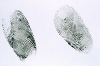 FINGERPRINTS<br /> Whorl<br /> A fingerprint is an imprint made by the pattern of ridges on the pad of a human finger. No two humans have ever been found to have identical fingerprints. The five most commonly used are: whorl, right loop, left loop, arch and tented arch.