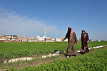 Women walk across a field in the Egyptian village of Sakra.