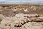 The landscape of Petrified Forest National Park in Arizona