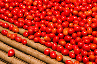 Cherry tomatoes ready to be packed with a machine
