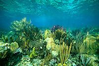 Coral reef crest in Cuba.