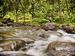 The natural beauty in the morning hours of Koloa Gulch streams on the northern shores of O'ahu