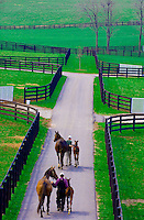 Lexington-Horse Farms-Winstar Farm