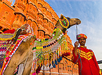 Man on camel in front of the Hawa Mahal (Palace of the Winds), Jaipur, Rajasthan, India