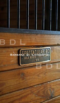 Spectacular Bid (Bold Bidder - Spectacular, by Promised Land)