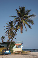 Anguilla, British West indies, Caribbean - Palm grove beach shack in Savannah bay with kitesurfing kite in sky above.