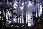 A path leading through the an Oregon Coast forest surrounded with fog