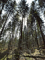 FOREST_LOCATION_90199