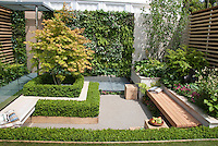 Garden Bench in small patio garden with plantings, wall, privacy, Acer, boxwood Buxus