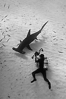 RR1838-Dbw. Great Hammerhead Shark (Sphyrna mokarran), tall dorsal fin, head shape, and huge size (to 6 meters) helps distinguish from other hammerheads. Gestation 11 months, litter size 3-42 pups. Underwater photographer (model released) captures the moment. Bahamas, Atlantic Ocean. Color photo converted to black and white.<br /> Photo Copyright &copy; Brandon Cole. All rights reserved worldwide.  www.brandoncole.com