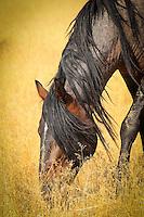 Grazing - Wild Horse - Utah