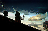 Two Children watch sharks in an aquarium at Universeum Science center.