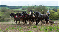 BNPS.co.uk (01202 558833)<br /> Pic: PhilYeomans/BNPS<br /> <br /> The times they are not changing down on Jonathan Waterer's Devon farm.<br /> <br /> He still uses a team of magnificent Shire horses to work his 100 acre property near Barnstaple, just as it was done for hundreds of years before the arrival of the internal combustion engine.<br /> <br /> His magnificent heavy horses - which weigh nearly a ton and can be well over 6ft at the shoulder - are much cheaper to run than gas guzzling tractors, as Mr Waterer grows oats to feed them and the only other food they need is grass.<br /> <br /> Mr Waterer says 'the traditional methods may be more time consuming, but I feel it is part of our identity and we can reap the benefits'