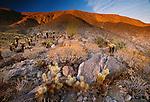 Desert landscape, Anza-Borrego Desert State Park, California, USA
