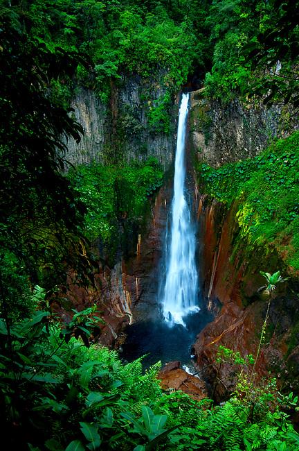 Costa Rica, Bajos del Toro, Cataratas del Toro, Rainforest, Juan Castro Blanco National Park