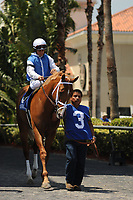 HALLANDALE BEACH, FL - APRIL 01: All Included, trained by Todd Pletcher, with Javier Castellano aboard, parades out for the 66th running of the Appleton Grade III Stakes on Florida Derby Day at Gulfstream Park on April 01, 2017 in Hallandale Beach, Florida. (Photo by Carson Dennis/Eclipse Sportswire/Getty Images)