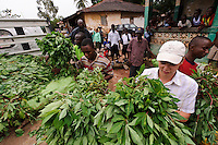 Rocco Falconer examining a recent harvest of cassava leaf, Newton, Freetown, Sierra Leone. Planting Promise is an organization dedicated to the development of education in Sierra Leone. Its aim is to bring opportunities to initiate self-run, self-supporting projects that offer real solutions to the difficulties facing the world's poorest country. They believe real and lasting development comes from below, from local projects that address specific needs, rather than large international models. To this end, they currently run five projects that aim to bring wealth into the country through business. The profits from these businesses are then used to support free education for children and adults...Through the combination of business with social progress, the charity hopes that they are providing real, lasting and profound changes for the better, by promoting sustainable and beneficial industry in the country, and putting it to the service to the needs of the people. As well as providing the income to fund the school, the farms will also be an example of successful commercial enterprise to teach the children in the school the viability of profit-making schemes that go beyond subsistence models, the only things the children of these desperately poor areas are accustomed to. By learning particular details of the challenges that they will face, the children will emerge from this school equipped to contribute in a real way to their society.