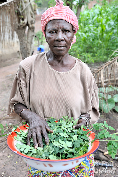 Kisaka Mutombo with moringa leaves she has harvested from a tree in her yard in Kamina, Democratic Republic of the Congo. The Moringa (moringa oleifera) is an exceptionally nutritious tree with a variety of uses. It has the potential to improve nutrition, boost food security, foster rural development and support sustainable landcare. In the Congo, the United Methodist Committee on Relief (UMCOR) promotes the cultivation and use of moringa. Mutombo is one of the program beneficiaries...