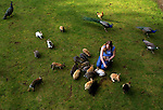 May 16, 2003 - Melody  Le May  of Dallas, Oregon, feeds rabbits, peacocks, chickens and roosters on the farm of friends Steve and Cindy Vincent of Falls, City, Oregon. The Vincent's are Winnimem Wintu Indians and have the sacred animals and others free-ranging on their land. The rabbits (pot-kel-ils) are very special to them and come running whenever someone feeds them bread.