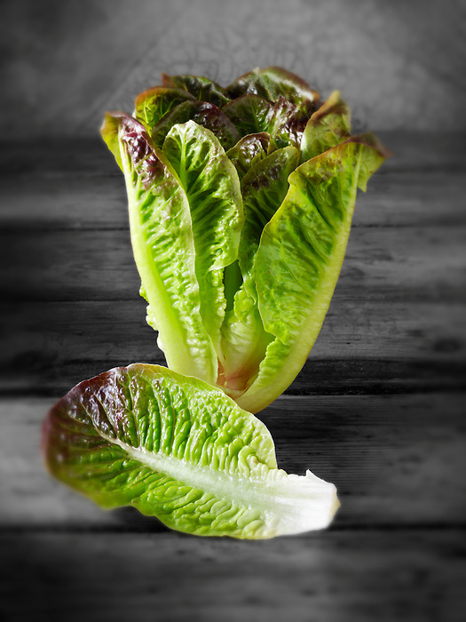 Red leaved Cos lettuce  photos, pictures & images