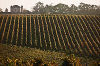 Vignoble de Cahors / Cahors vineyard