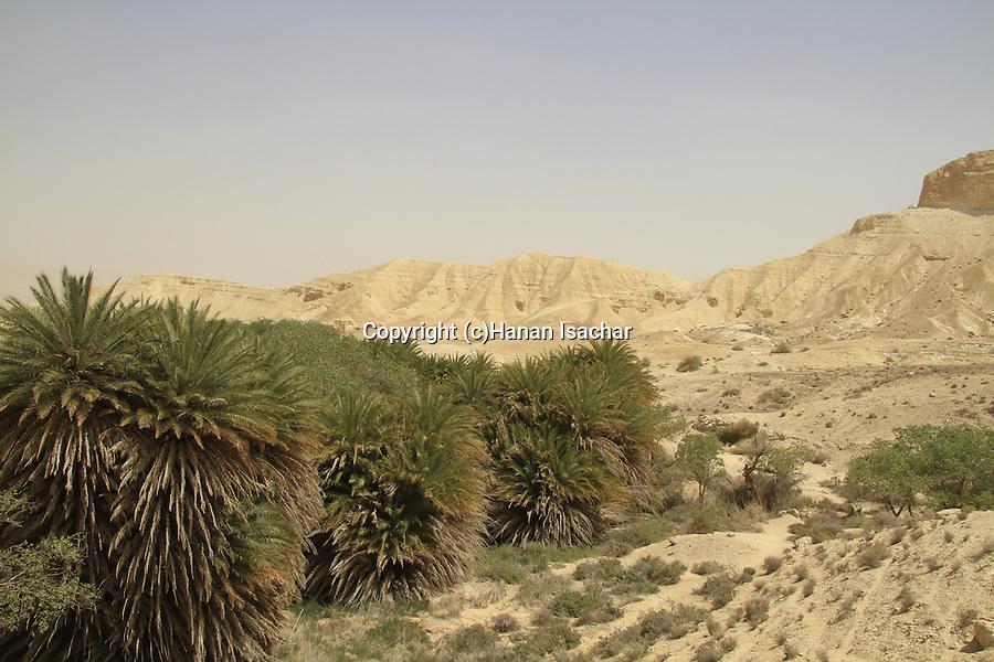 Israel, Negev, Ein Shaviv in Zin valley