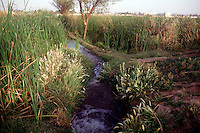 IRRIGATION ALONG THE NILE<br />