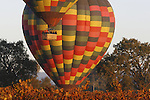 Hot air balloons sail over autumn vineyards in Napa Valley, California.