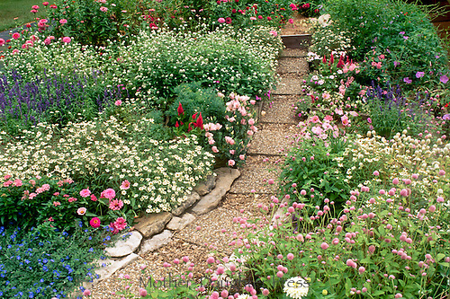 Informal cottage garden pavers lined by quarry rock to make stable walkway through milticolored blooming garden