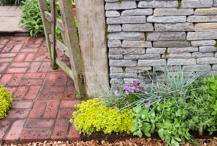 Herb and flower garden chives allium, Origanum golden oregano next to house wall, fence gate entrance, brick patio
