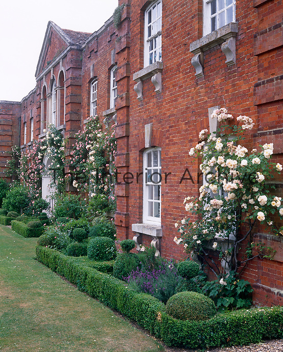 Flowerbeds framed with low box hedges are planted with climbing roses and lavender