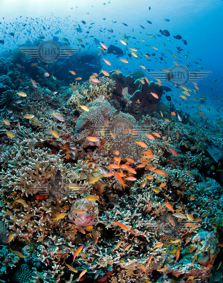 A healthy part of a coral reef on the North coast of Bali, with lots of fish. Coral growth and marine life has made Tulamben a popular  tourist destiantion for divers. In turn creating business opportunities and jobs for locals who often used to practice destructive fishing methods.  The corals which are highly sensitive to environmental changes have faced adverse fishing methods as well as increased water temperatures. Scientists predict that more than haft the world's coral reefs may be gone by the year 2030 due to global warming and other threats..
