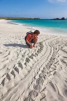 Sea turtle tracks in the san on Gardner beach, Espanola Island, Galapagos Islands, Ecuador.