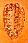 Cantaloupe melon sliced in half with seed in the center.