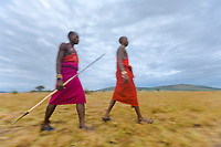 Masai tribesman walk across the savannah at sunrise in the Masai Mara, Kenya, Africa