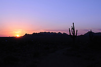 Apache Junction, Arizona. The Saguaro Cactus is native to the Sonoran Desert in the state of Arizona. Combined with sunsets, saguaro cactus and other species of the flora create spectacular scenery typical of the American Southwest. The shape of a saguaro is a recognizable silhouette over the Sonoran Desert skyline. This area is part of the Lost Dutchman State Park is located in the area of the Superstition Mountains in the Sonoran Desert, 40 miles east of Phoenix, Arizona. The park takes its name from a fabled lost gold mine. Photo by Eduardo Barraza © 2011