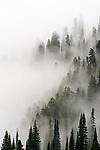 Cloud forest, Glacier National Park, Montana USA